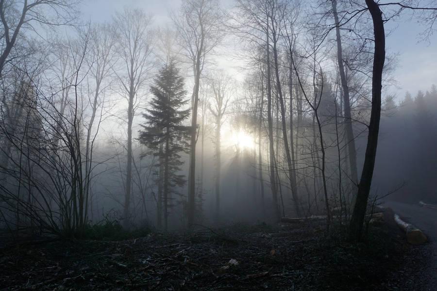 Dark Night In The Forest Widescreen Wallpaper