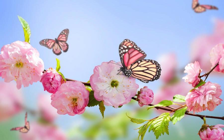 Pretty Pink Flower Widescreen Wallpaper Wide Wallpapers