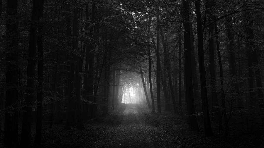 16481-dark-and-foggy-forest-