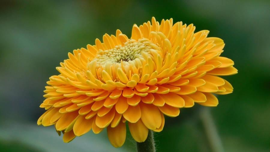 Цветочный дизайн фото