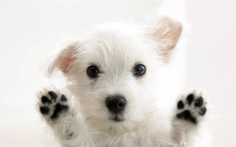 Cute Dogs - Wallpaper #13861