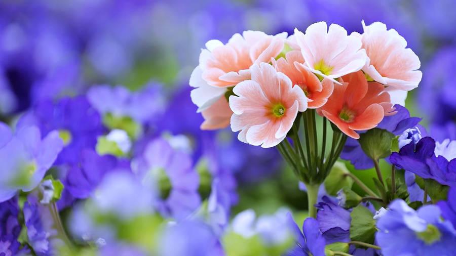 Download wallpaper Flowers summer macro Snowdrops free desktop HD