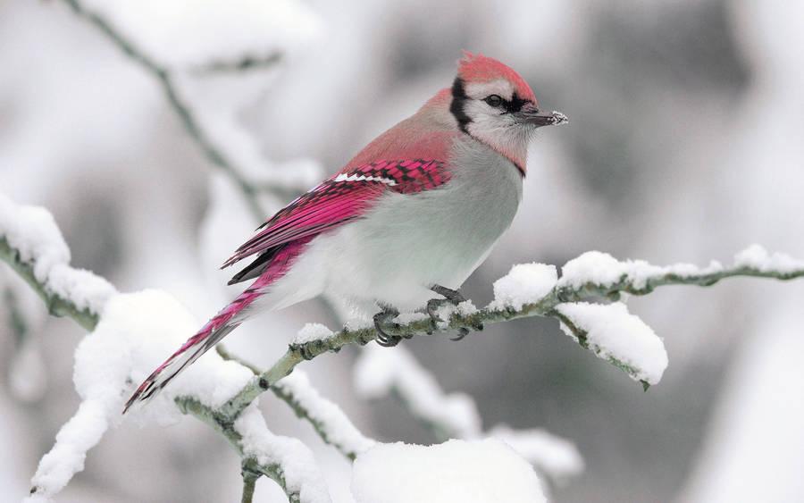 For The Birds Wallpaper Cartoon Wallpapers 12870