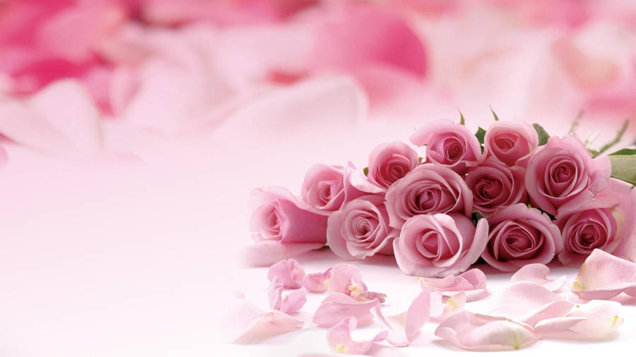 Red Rose Petals And Pearls Widescreen Wallpaper