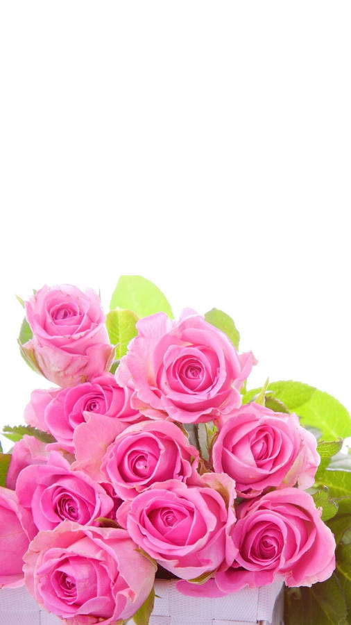 Pink Roses On Pink Background Widescreen Wallpaper Wide