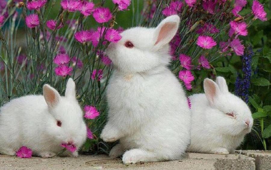 Cute Bunny Wallpaper Animal Wallpapers 25582