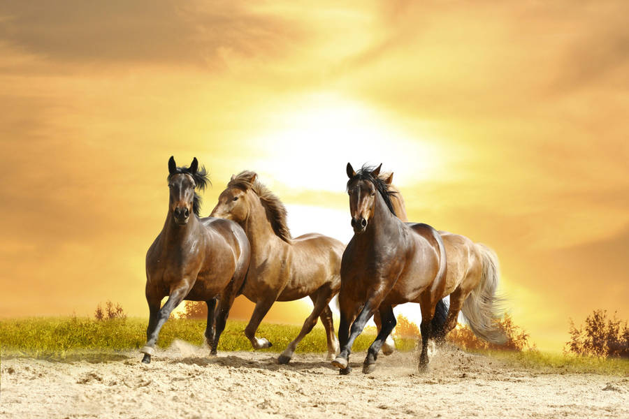Black horses running at night - photo#25
