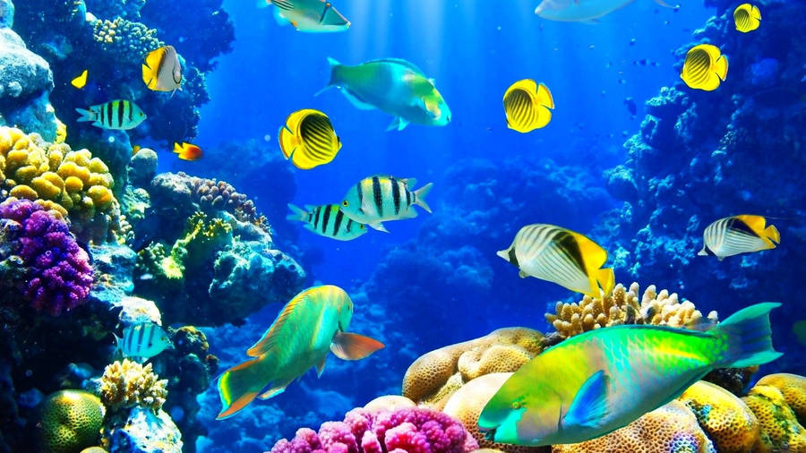 Living Marine Aquarium 2 Animated Wallpaper