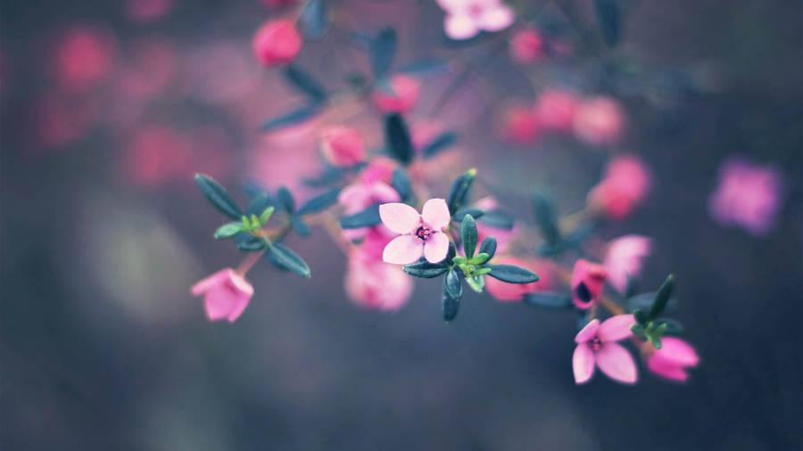 Download 55 Koleksi Background Tumblr Bunga HD Terbaik