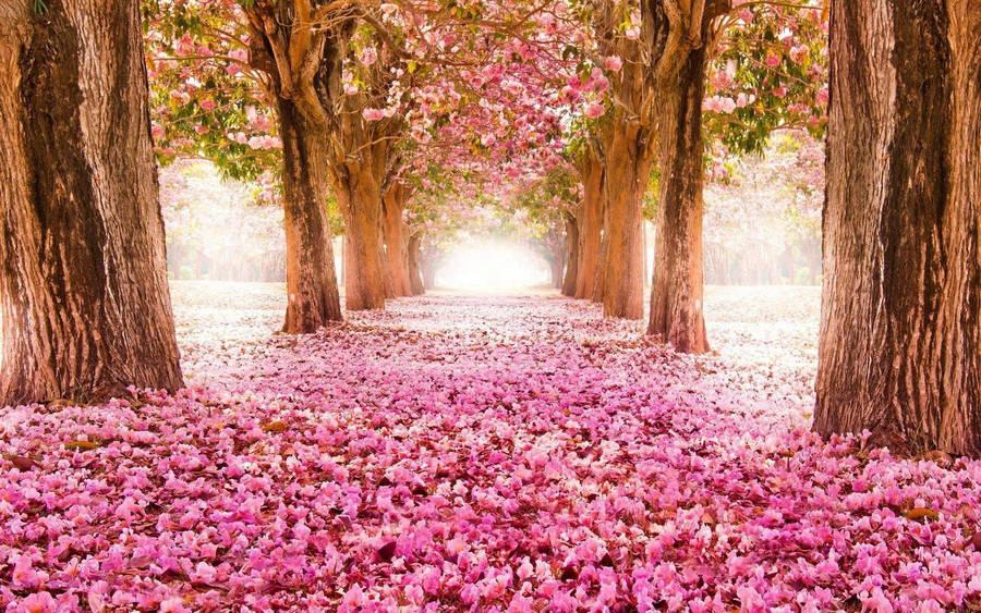 Pink Spring Flowers widescreen wallpaper | Wide-Wallpapers.NET