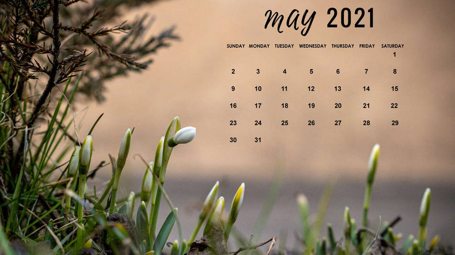 Download Sprouting Tulips May Calendar 2021 Wallpaper ...