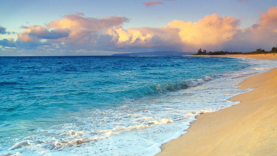 palm tree beach sunset wallpaper - photo #9