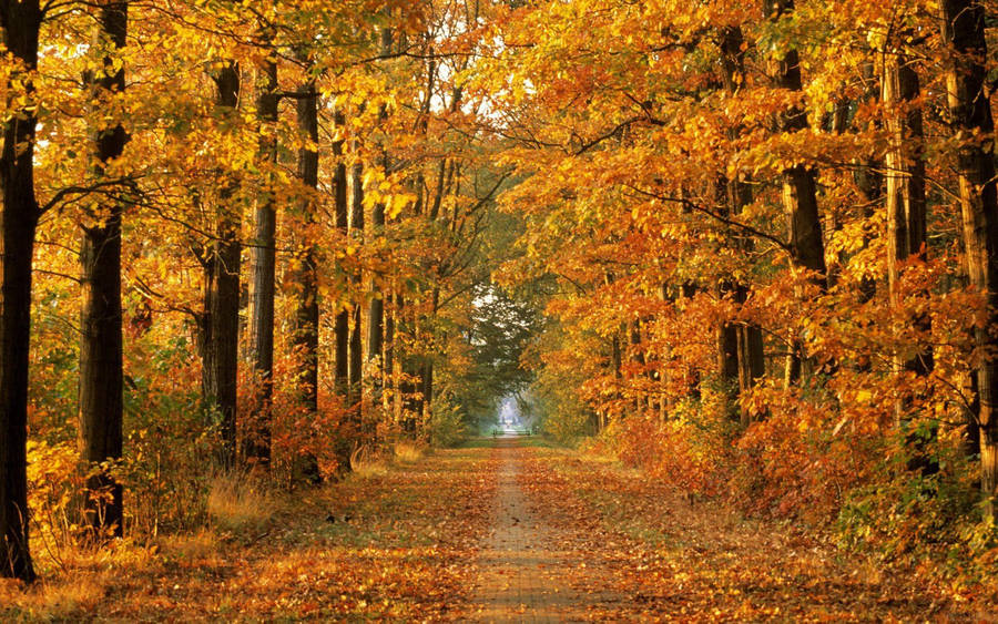 Country Side Road In The Fall Time Widescreen Wallpaper