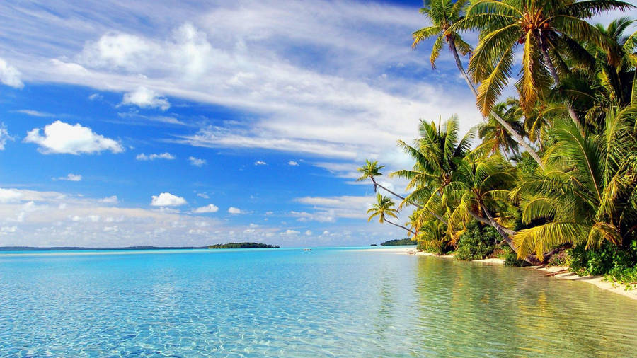 Exotic Island Palm Trees Beach Widescreen Wallpaper