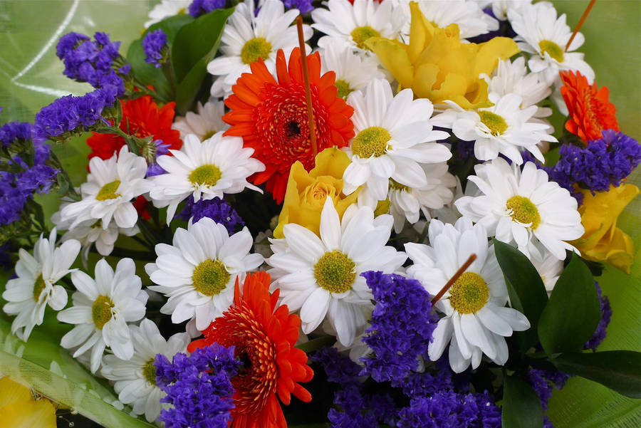download flowers pictures