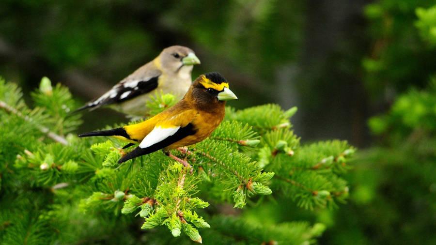 couple bird wallpaper