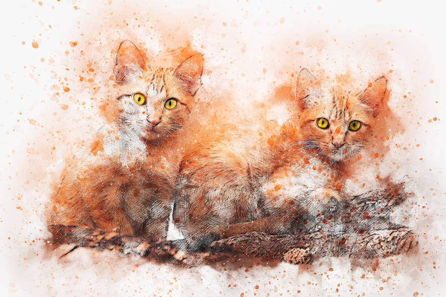 白貓與紅螃蟹