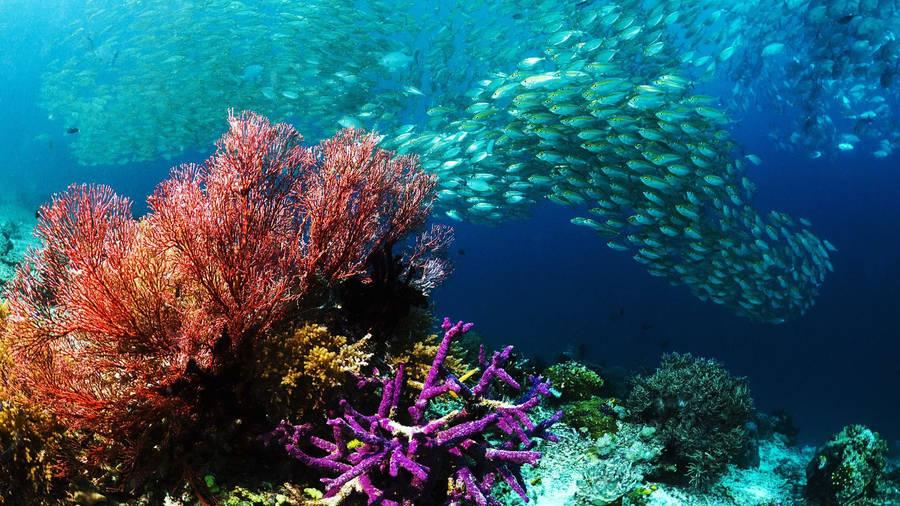 Underwater Wreck Wallpaper Digital Art Wallpapers 8725