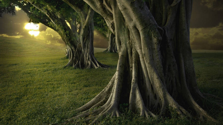 Wide wallpapers largest collection of high quality hd and wide road arch of green trees voltagebd Gallery