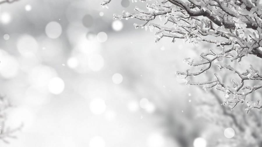 branches on white christmas on holiday season winter season yuletide celebration