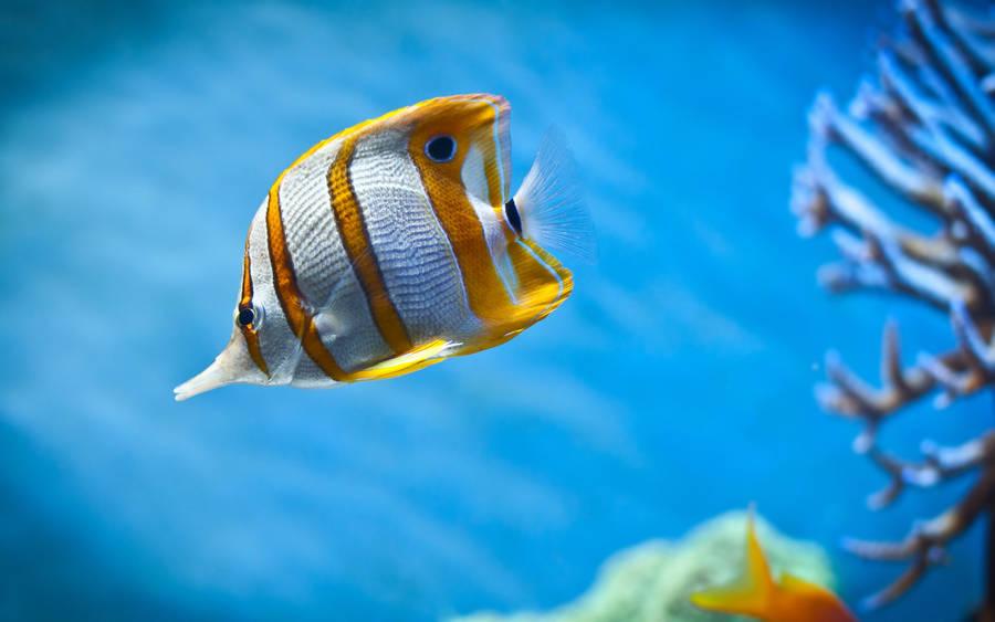 Colorful Tropical Fish Wallpaper Animal Wallpapers 4838