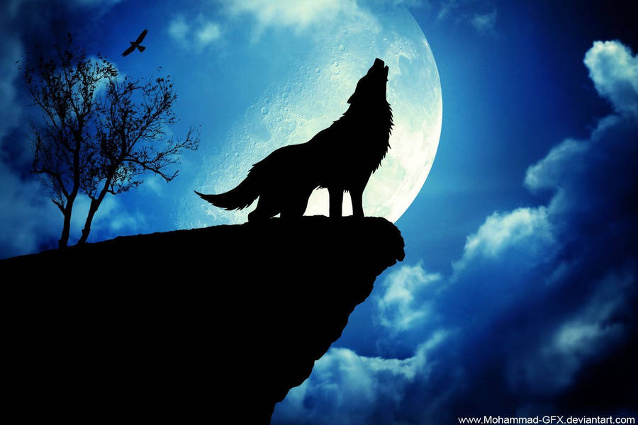 cute wolf couple wallpaper - animal wallpapers - #50527
