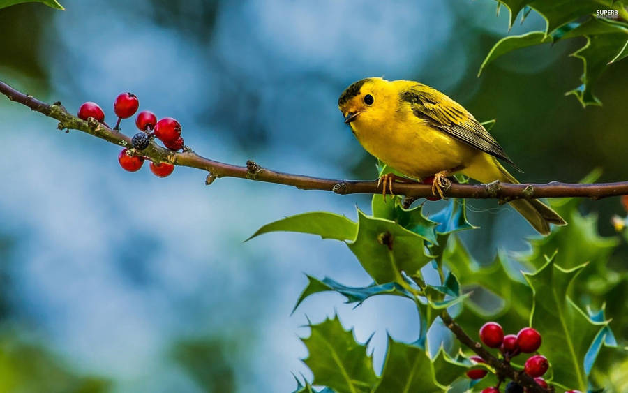 Beautiful Bird On Branch  Free Beautiful Wallpaper Download For Your