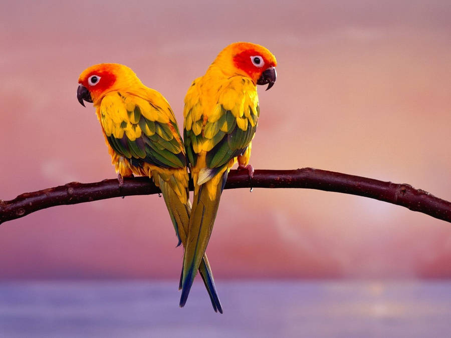 beautiful birds wallpaper | top wallpapers